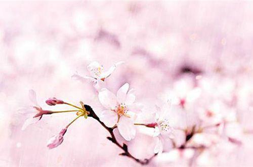 凄凉的爱情说说:最疼的疼是原谅,最黑的黑是绝望