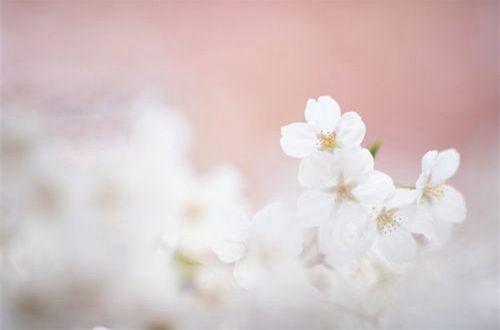 励志的说说心情 能吃亏是做人的一种境界,是处世的一种睿智