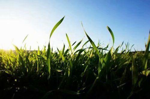 阳光简单励志说说图片:走过应走的路才能过上想要的生活