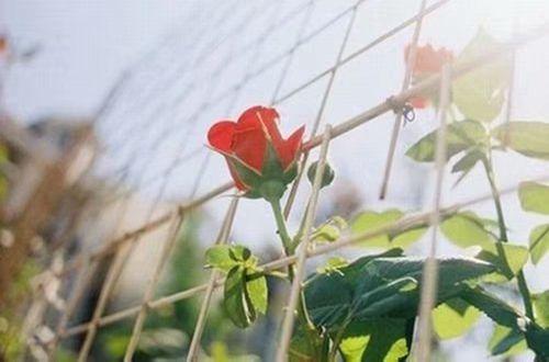 凄美的让人心痛的爱情说说短语、第一次的爱,始终无法轻描淡写