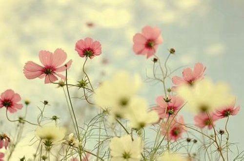 繁体字伤感说说:原來,愛情是含笑飲毒酒。