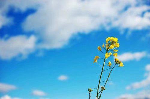 励志短语句子说说:为爱坚持的人,记得坚持可以,但是不要为爱受